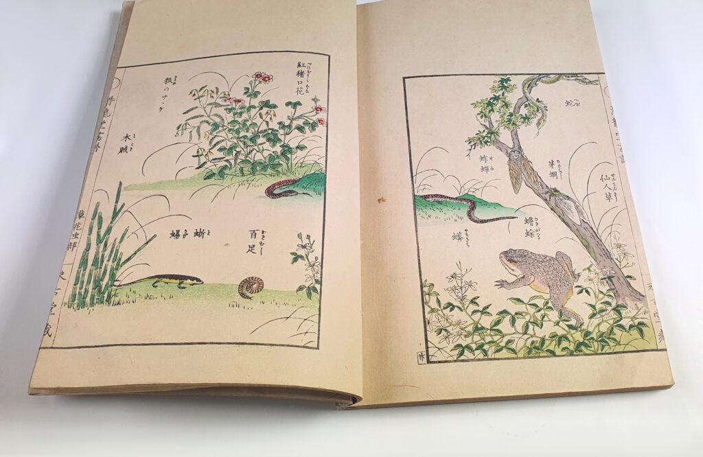 Drzeworyt z albumu Trawy, kwiaty i owady