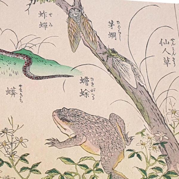 Obraz wpisu - fragment rysunku z żabą